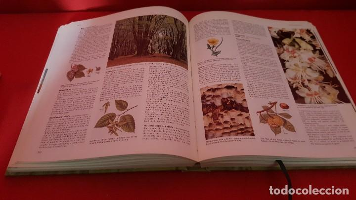 Libros de segunda mano: BOOK OF THE BRITISH COUNTRYSIDE. EN INGLÉS. - Foto 5 - 125280219