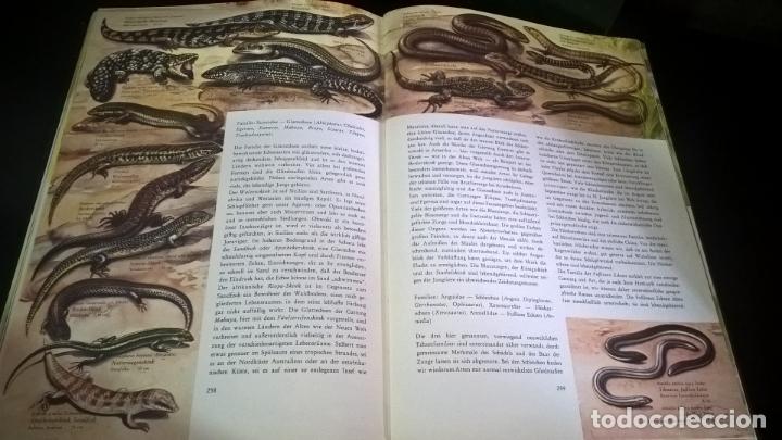 Libros de segunda mano: ENZYKLOPADIE DER TIERE. WILHELM EIGENER. GEORG WESTERMANN VERLAG. 2 TOMOS. EN ALEMAN. - Foto 4 - 174064850