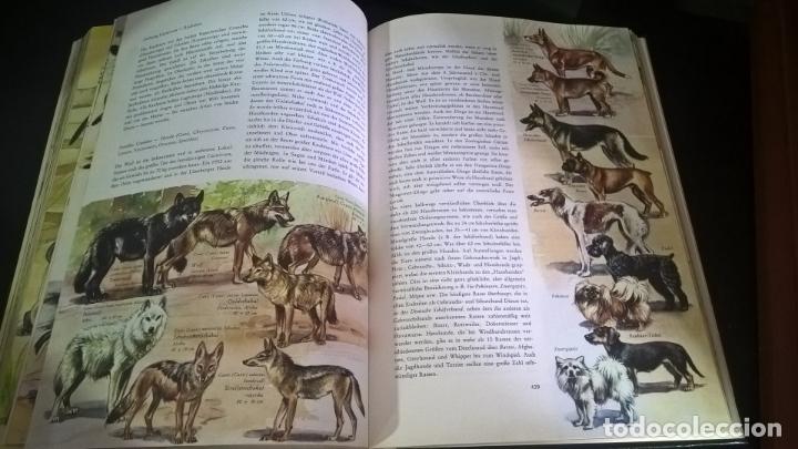 Libros de segunda mano: ENZYKLOPADIE DER TIERE. WILHELM EIGENER. GEORG WESTERMANN VERLAG. 2 TOMOS. EN ALEMAN. - Foto 13 - 174064850