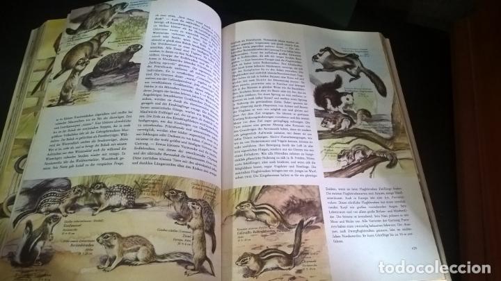 Libros de segunda mano: ENZYKLOPADIE DER TIERE. WILHELM EIGENER. GEORG WESTERMANN VERLAG. 2 TOMOS. EN ALEMAN. - Foto 15 - 174064850