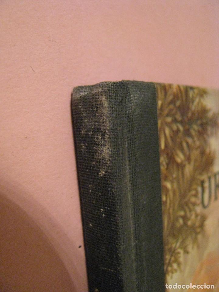 Libros de segunda mano: URTIDA DJUR. EN SUECO. LINCOLN BARNETT. TRADUCIDO POR GERHARD REGNELL. ANIMALES PREHISTÓRICOS. 1961. - Foto 7 - 203293093