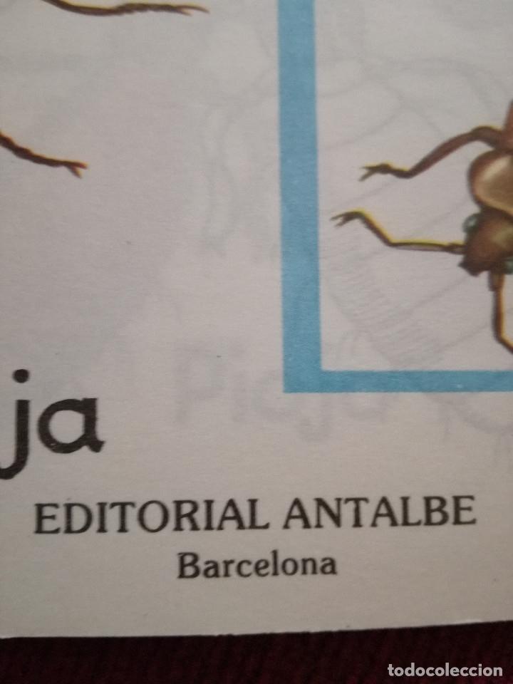 Libros de segunda mano: 10 Colección Gigante infantil ANIMALES-PECES-INSECTOS-NATURALEZA-DEPORTES-SOLDADOS ANTALBE - Foto 12 - 126890463