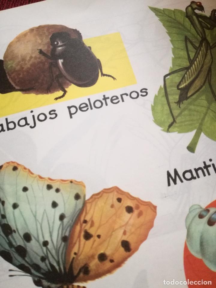 Libros de segunda mano: 10 Colección Gigante infantil ANIMALES-PECES-INSECTOS-NATURALEZA-DEPORTES-SOLDADOS ANTALBE - Foto 15 - 126890463