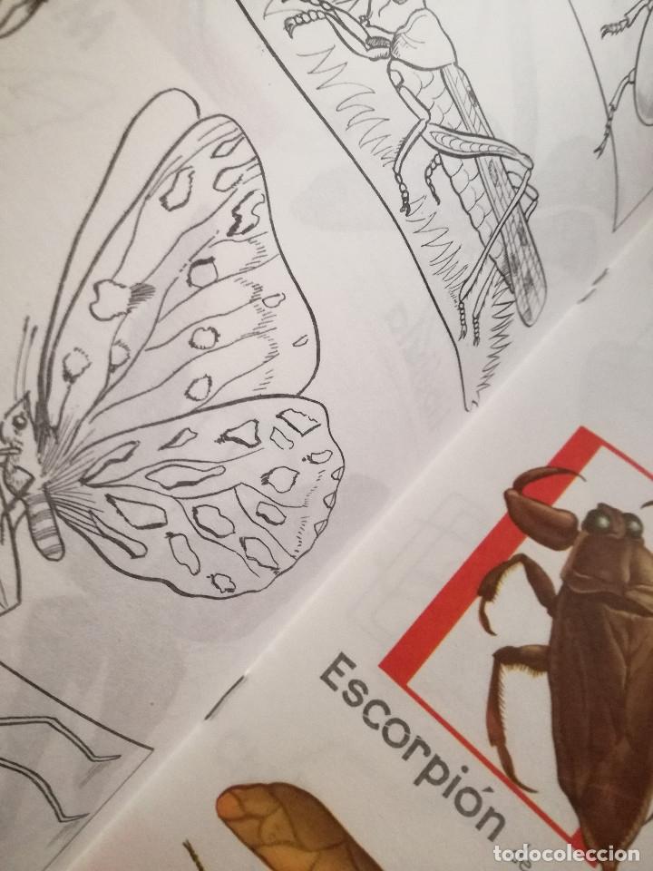 Libros de segunda mano: 10 Colección Gigante infantil ANIMALES-PECES-INSECTOS-NATURALEZA-DEPORTES-SOLDADOS ANTALBE - Foto 13 - 126890463