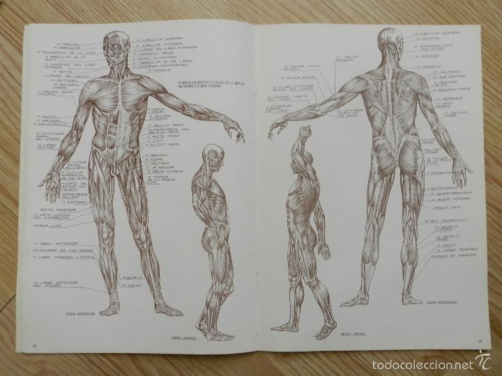 anatomia para artistas coleccion leonardo nº4 n - Comprar Libros de ...