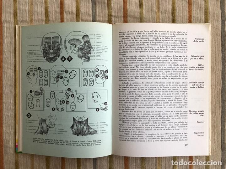 anatomía para artistas. editorial leda. benedic - Comprar Libros de ...