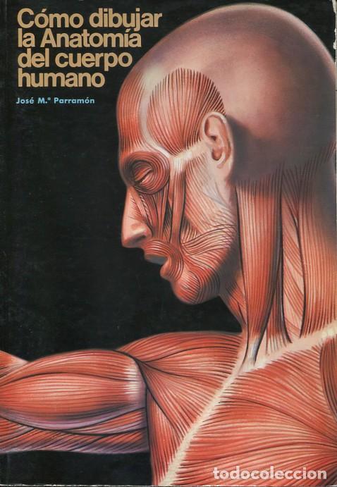 Fantástico Cómo Dibujar La Anatomía Bosquejo - Anatomía de Las ...