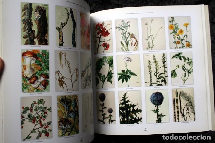 Libros de segunda mano: SUZANNE DAVIT - UNA IL.LUSTRADORA A L´INSTITUT BOTÀNIC Omnis Cellula,Insitut Botànic de Barcelona, - Foto 5 - 97712727
