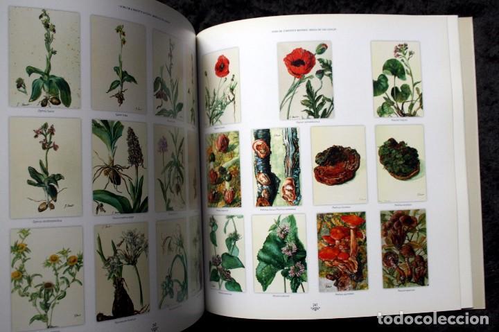 Libros de segunda mano: SUZANNE DAVIT - UNA IL.LUSTRADORA A L´INSTITUT BOTÀNIC Omnis Cellula,Insitut Botànic de Barcelona, - Foto 16 - 97712727