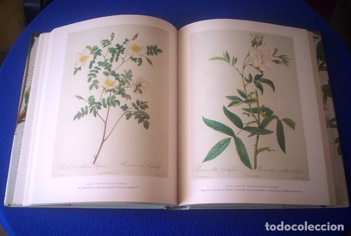 Libros de segunda mano: PIERRE-JOSEPH REDOUTÉ: THE ROSES - Foto 2 - 108241643