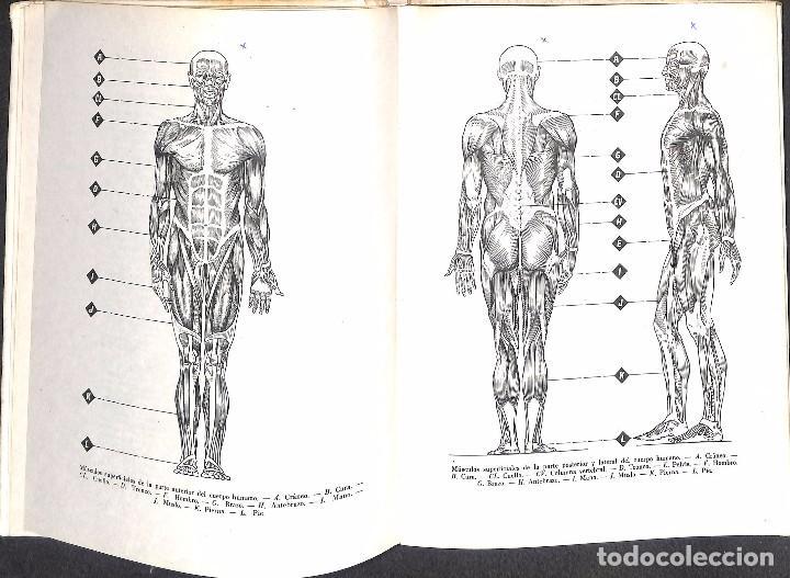Libros de segunda mano: ANATOMÍA PARA ARTISTAS - U. BENEDICTS - Foto 2 - 132112190