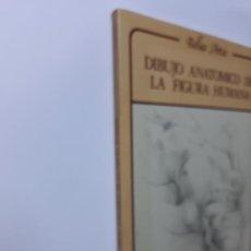 Libros de segunda mano: DIBUJO ANATÓMICO DE LA FIGURA HUMANA LOUISE GORDÓN. Lote 133568731