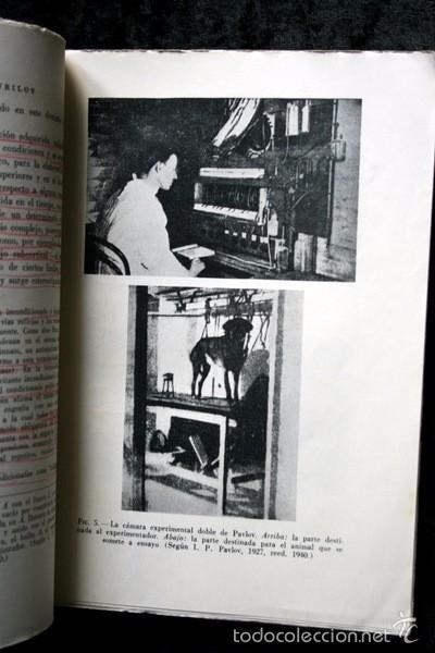 Libros de segunda mano: EL PSICOANALISIS A LA LUZ DE LA REFLEXOLOGIA - K. GAVRILOV - 1953 - PAIDOS - BUENOS AIRES - Foto 3 - 57735273