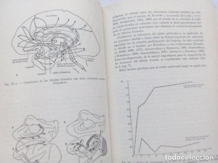 Libros de segunda mano: EL CEREBRO EN ACCION ALEKSANDER ROMANOVICH LURIA, ED. FONTANELLA 1974 Nº 21. CONDUCTA HUMANA - Foto 6 - 119863495