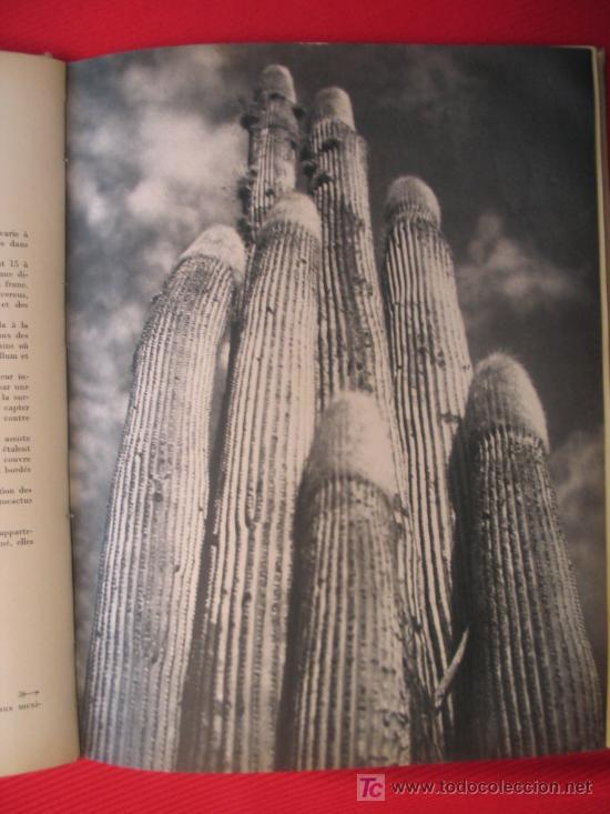 Libros de segunda mano: BEAUTÉS DE LA FLORE EXOTIQUE - Foto 2 - 7264264