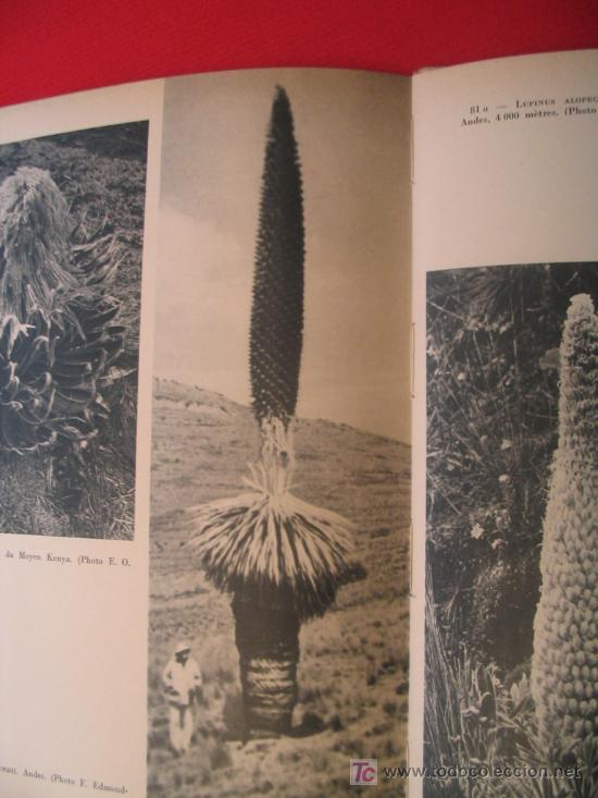 Libros de segunda mano: BEAUTÉS DE LA FLORE EXOTIQUE - Foto 3 - 7264264