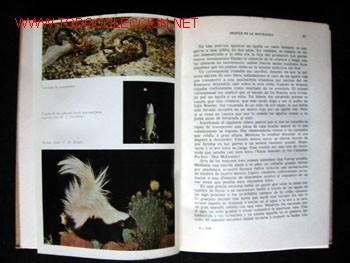 Libros de segunda mano: DESFILE DE LA NATURALEZA, por FRANK W. LANE - Foto 4 - 25806122