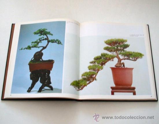 Bonsai el arte de los paisajes en miniatura de comprar - Libros de bonsais ...
