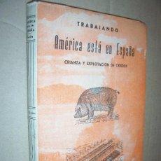 Libros de segunda mano: TRABAJANDO : AMÉRICA ESTÁ EN ESPAÑA ,CRIANZA Y EXPLOTACIÓN DE CERDOS / FERMÍN DE SAJA , 1957. Lote 20392135