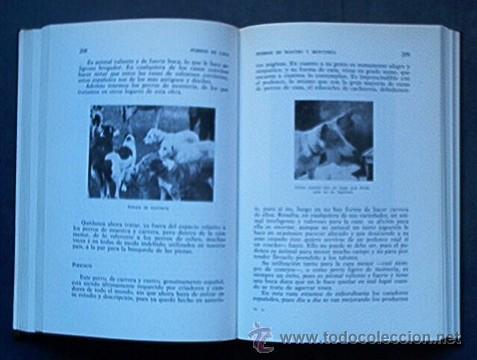 Libros de segunda mano: PERROS DE CAZA - Foto 3 - 27410435