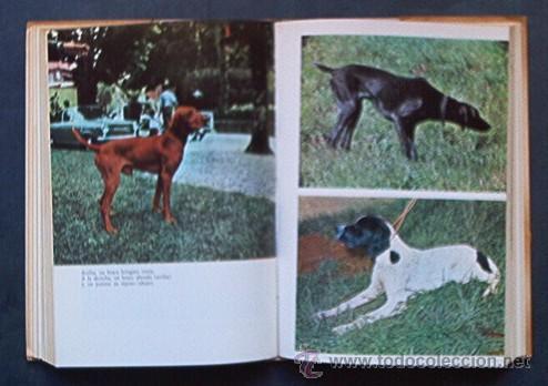 Libros de segunda mano: PERROS DE CAZA - CONOCERLOS ADIESTRARLOS - Foto 3 - 25159439