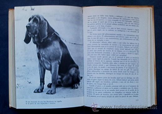 Libros de segunda mano: PERROS DE CAZA - CONOCERLOS ADIESTRARLOS - Foto 4 - 25159439