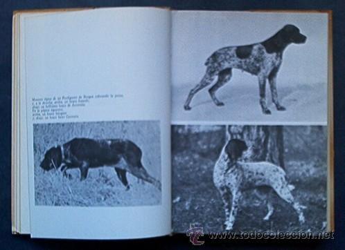 Libros de segunda mano: PERROS DE CAZA - CONOCERLOS ADIESTRARLOS - Foto 5 - 25159439