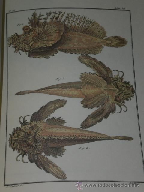 Libros de segunda mano: SPICILEGIA ZOOLOGICA - Foto 3 - 27443716