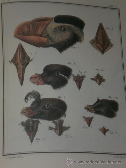 Libros de segunda mano: SPICILEGIA ZOOLOGICA - Foto 5 - 27443716