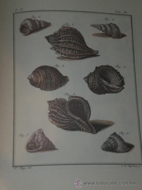 Libros de segunda mano: SPICILEGIA ZOOLOGICA - Foto 7 - 27443716