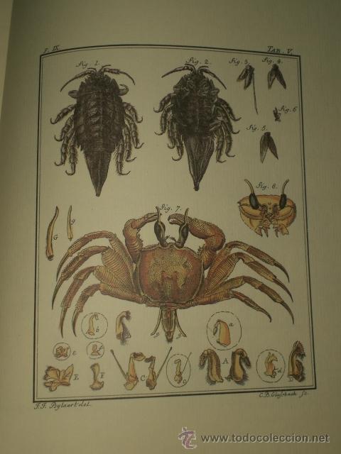 Libros de segunda mano: SPICILEGIA ZOOLOGICA - Foto 8 - 27443716
