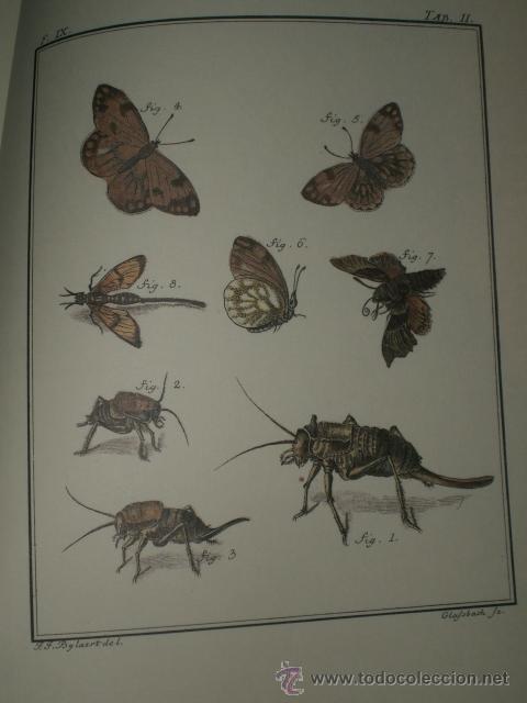 Libros de segunda mano: SPICILEGIA ZOOLOGICA - Foto 10 - 27443716