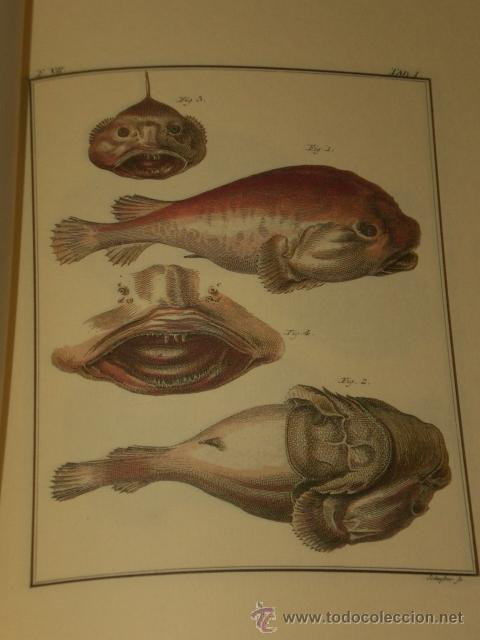 Libros de segunda mano: SPICILEGIA ZOOLOGICA - Foto 11 - 27443716