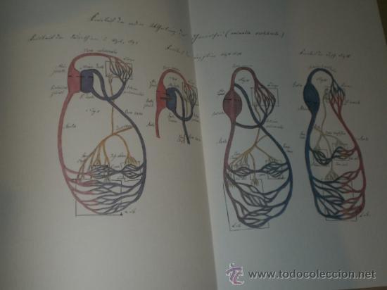 Libros de segunda mano: SPICILEGIA ZOOLOGICA - Foto 12 - 27443716