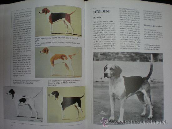 Libros de segunda mano: Libro. Caza. El gran libro del cazador y de los perros de caza. Claudio de Giuliani. Barcelona, 2004 - Foto 4 - 28327753