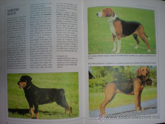 Libros de segunda mano: Libro. Caza. El gran libro del cazador y de los perros de caza. Claudio de Giuliani. Barcelona, 2004 - Foto 6 - 28327753