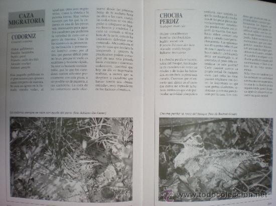 Libros de segunda mano: Libro. Caza. El gran libro del cazador y de los perros de caza. Claudio de Giuliani. Barcelona, 2004 - Foto 8 - 28327753