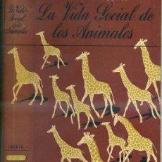Libros de segunda mano: H. WOHLBOLD : LA VIDA SOCIAL DE LOS ANIMALES (IBERIA, 1943). Lote 29471929