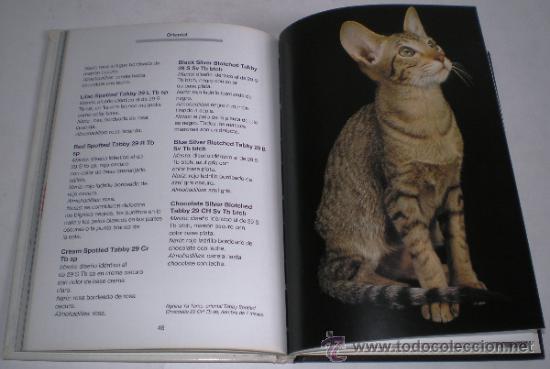 Libros de segunda mano: MAIA BELTRAME: CRÍE Y CONOZCA A SU GATO SIAMÉS Y ORIENTAL. - Foto 2 - 37104994