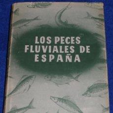 Libros de segunda mano: LOS PECES FLUVIALES DE ESPAÑA - LUIS LOZANO Y REY (1952). Lote 37913827