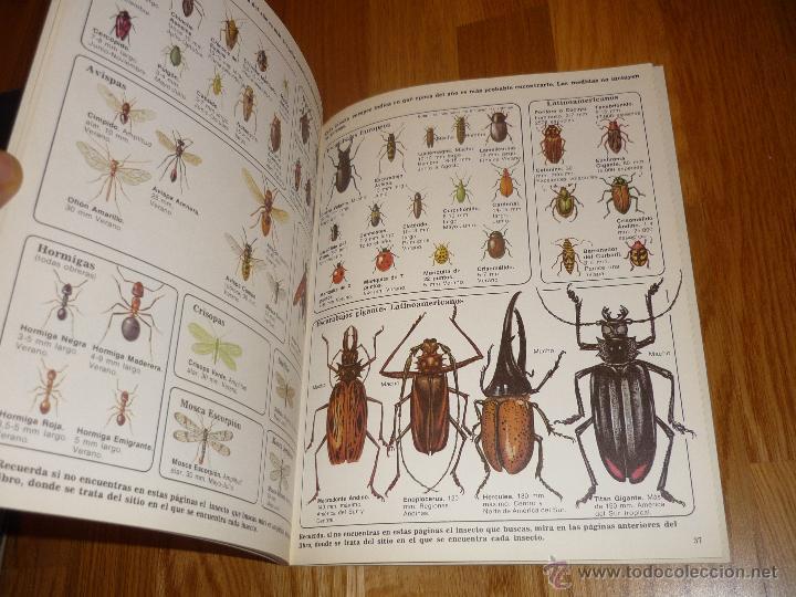 Libros de segunda mano: LA SENDA DE LA NATURALEZA - INSECTOS - EDICIONES PLESA 1977 - Foto 4 - 40915857