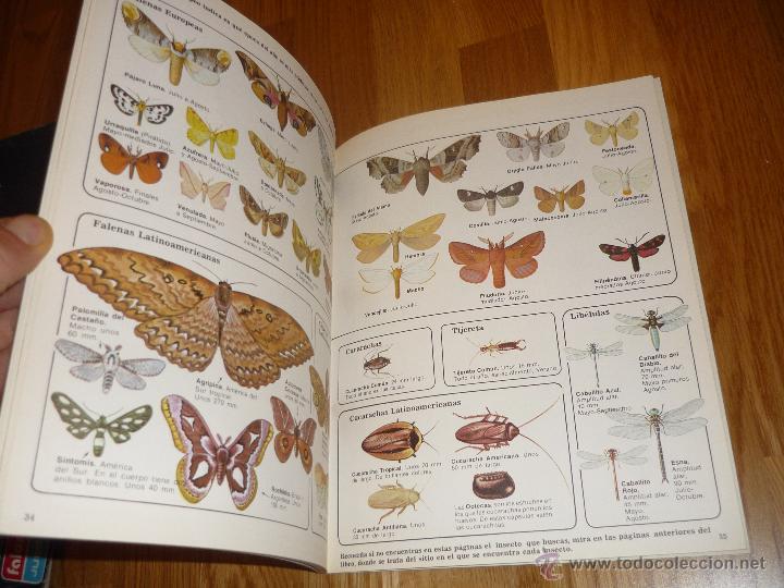 Libros de segunda mano: LA SENDA DE LA NATURALEZA - INSECTOS - EDICIONES PLESA 1977 - Foto 5 - 40915857