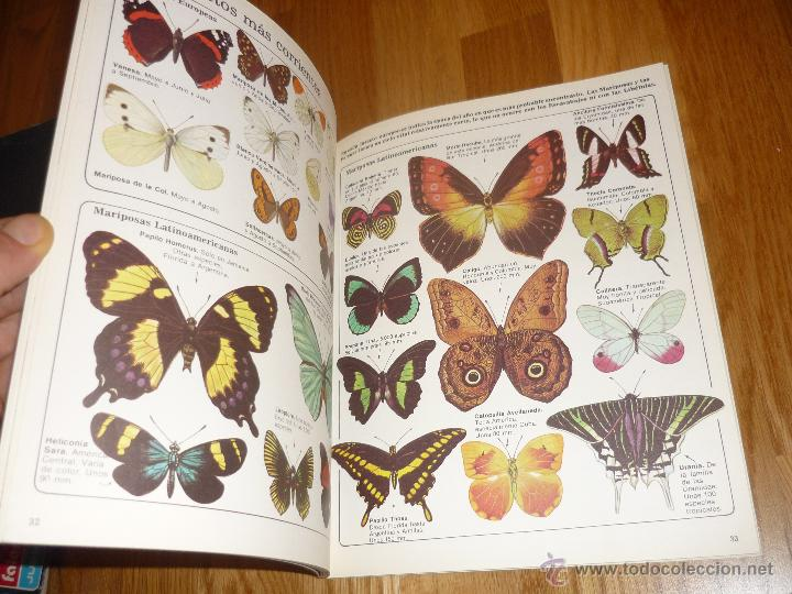 Libros de segunda mano: LA SENDA DE LA NATURALEZA - INSECTOS - EDICIONES PLESA 1977 - Foto 6 - 40915857