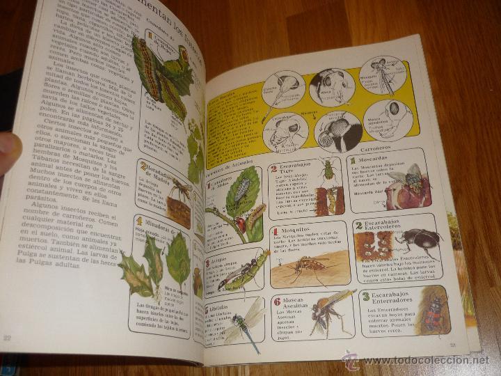 Libros de segunda mano: LA SENDA DE LA NATURALEZA - INSECTOS - EDICIONES PLESA 1977 - Foto 7 - 40915857