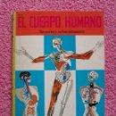 Libros de segunda mano: EL CUERPO HUMANO SUS PARTES Y SU FUNCIONAMIENTO LIBROS DE ORO DEL SABER 28 EDITORIAL NOVARO 1981. Lote 48548613