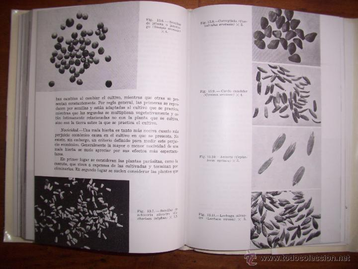Libros de segunda mano: BESNIER ROMERO, Fernando. Semillas - Foto 4 - 40887703