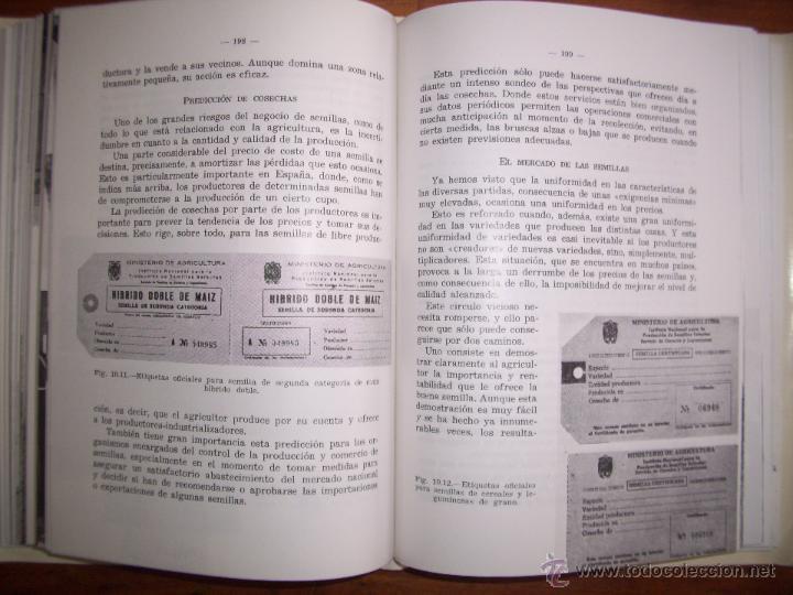 Libros de segunda mano: BESNIER ROMERO, Fernando. Semillas - Foto 5 - 40887703
