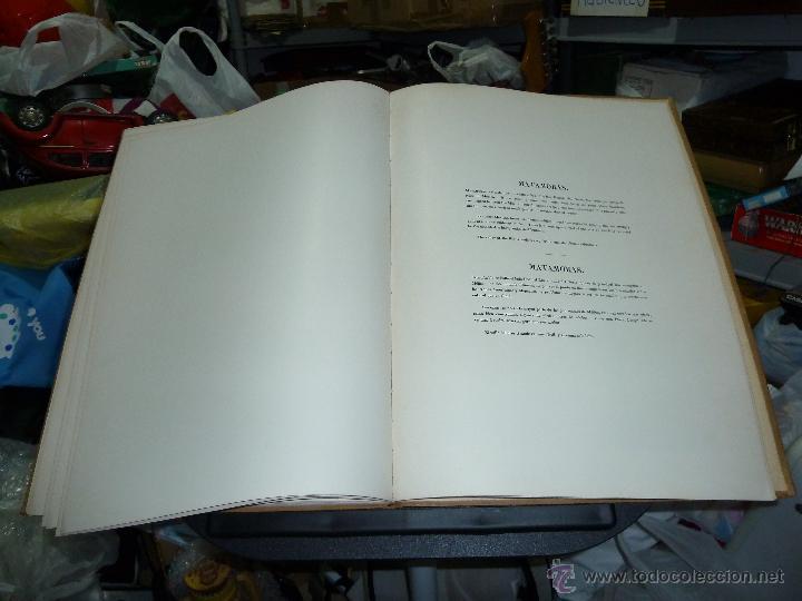 Libros de segunda mano: MEXICO ILUSTRADO POR JOHN PHILLIPS EDITORIAL DEL VALLE DE MEXICO 1972 - Foto 61 - 50230966