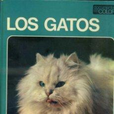 Libros de segunda mano: DOCUMENTAL COLOR TEIDE : LOS GATOS - MUY ILUSTRADO, GRAN FORMATO. Lote 50318490
