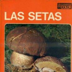 Libros de segunda mano: DOCUMENTAL COLOR TEIDE : LAS SETAS - MUY ILUSTRADO, GRAN FORMATO. Lote 50318510